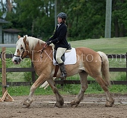 Belgian Under Saddle, Cornerstone Short Course Cornerstone Short Course June 2015