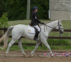 Canadian Sport Horse Under Saddle