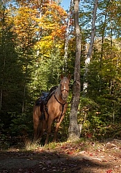 Trail Riding General Fall