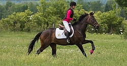 Thoroughbred , Low Level Eventing Cross Country