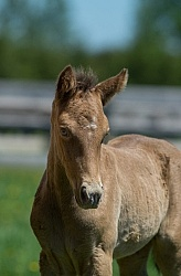 Rocky Mountain Foals