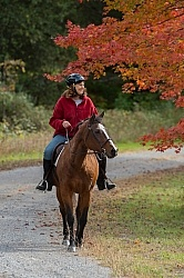 Senior Horse Being Ridden