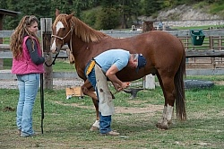 Farrier at Work