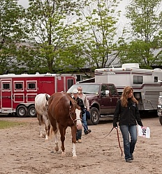 Appaloosa Leading Horse Around Show Grounds