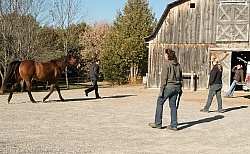 Vet and Farrier Consult