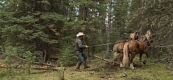 Hauling Firewood to Camp