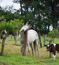 Horse and Calf at Hacienda La Alegria