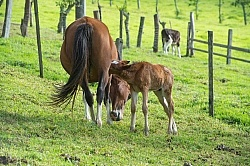 Mare and Foal at Hacienda La Alegria