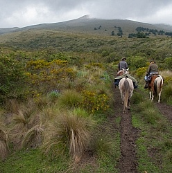 In the Paramo  on the Way to Bomboli