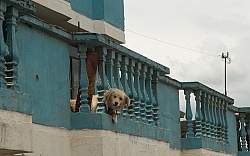 Roof Dogs in Aloag, Ecuador