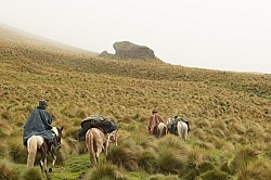 In the Paramo in the high Andes