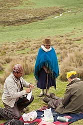 Lunch time vistor in the high Andes