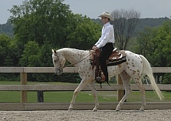 Appaloosa Western Pleasure