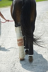 Hand Walking with Leg Bandage