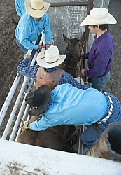 Broncos in the Chute