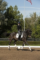 Dressage Serpentine