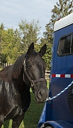 Flicka at Her Horse Trailer at Horse Country Campground