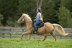 Girl Riding Rocky Mountain Horse, Bonnie View Farm