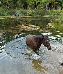 Ponying a Horse to Water