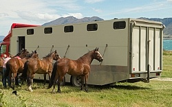 Horses at The Trailer After Riding Out of Dingleburn Station on the Land of the Long White Cloud Ride with Wild Womens Expeditions and Adventure Horse Trekking New Zealand