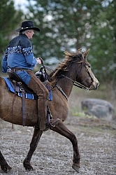Tennessee Walker Ridden