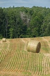 Round Bales of Hay
