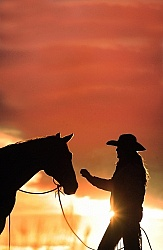 Silhouette Horse and Rider