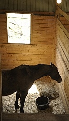 Sick Horse in Stall