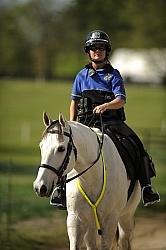 Reflective Wear on Horses