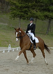 Dressage On The Bit