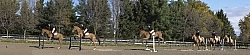 Hunter Jumper Schooling Grids