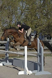 Quarter Horse Schooling Over Fences at Hilltop