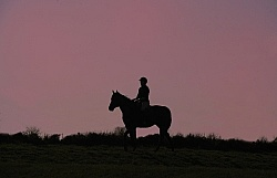 Silhoutte of Horse and Rider at Hilltop