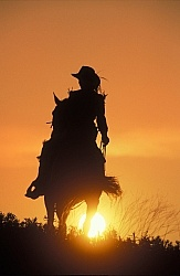 Silhoutte of Western Horse and Rider
