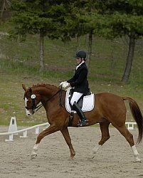 Lower Level Dressage Show