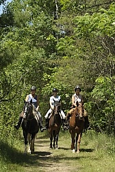 Trail Riding Group