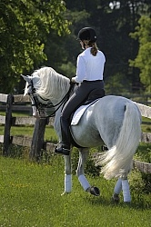 Lusitano Under Saddle