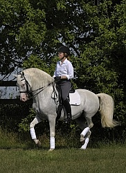 Lusitano Performing Piaffe