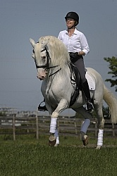 Lusitano Stallion Passage