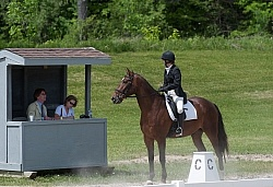 Dressage Lower Level Showing