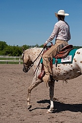 Appaloosa Showing