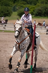 Appaloosa Pole Bending