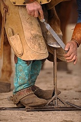 Farrier Trimming Foot