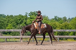 Quarter Horse Showing Western Pleasure