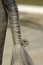 Braided Tail
