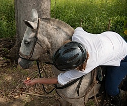 Ali feeds her horse Cantaloupe on the Trail