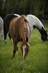 Home Horse keeping Grazing