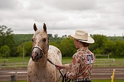 Appaloosa in Showmanship