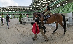 Belinda Trussell and Anton get used to the man ring on warm up day WEG 2014 Normandy