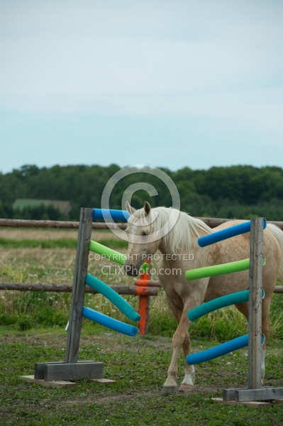 Natural Horsemanship through Obstacles